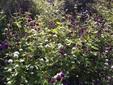 季節のはな・とり‐45‐ センニチコウ